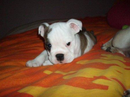 Clyde2